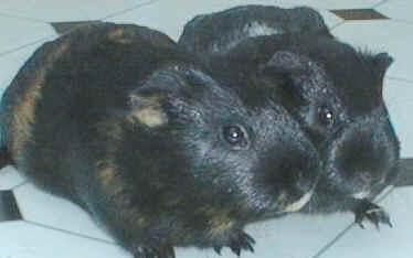 1999.guinea